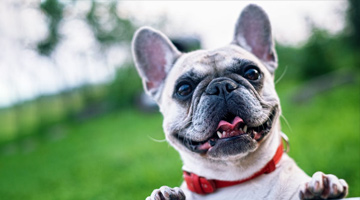 Best Flea Collars for dogs